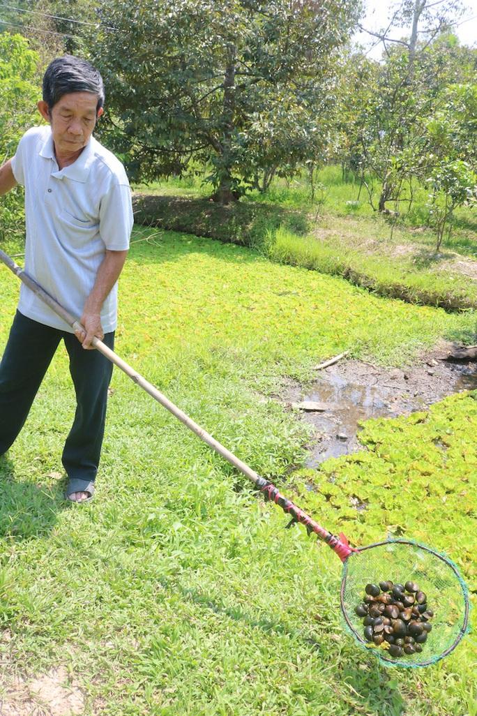 Lão nông 71 tuổi thu nhập 24 triệu đồng/tháng nhờ nuôi ốc bươu đen - Ảnh 9.