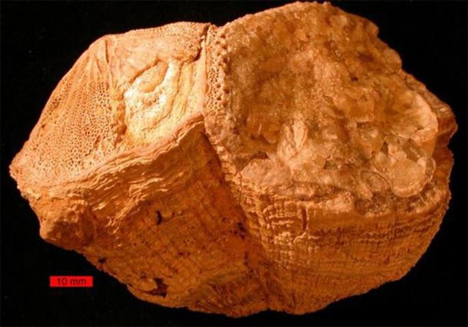 Tiết lộ sốc từ sinh vật lạ 70 triệu tuổi: trái đất từng quay khác hiện tại - Ảnh 1.