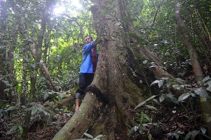 Điều gì tại khu rừng thiêng 300ha ở Quảng Ninh khiến lâm tặc sợ đến khiếp vía? - Ảnh 2.
