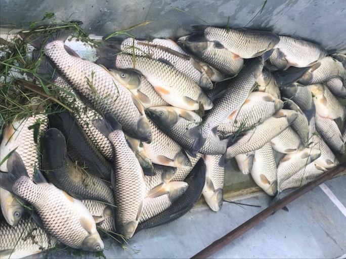 Cá chết hàng loạt bất thường trên sông Chu - Ảnh 1.