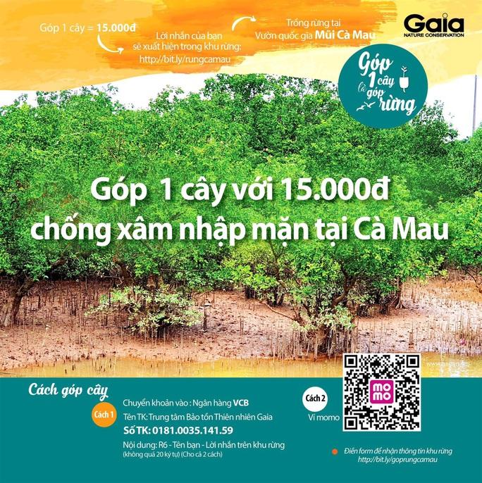 Chủ tịch Cà Mau chỉ đạo làm rõ việc vận động trồng rừng chống xâm nhập mặn - Ảnh 1.
