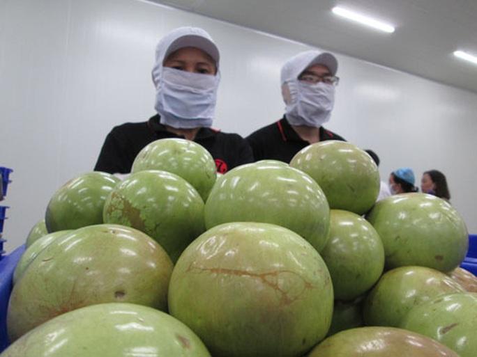 Xuất khẩu nông sản tìm cách hồi phục - Ảnh 1.