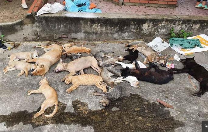Nhóm đối tượng gây ra hơn 100 vụ trộm chó với thủ đoạn tàn độc - Ảnh 2.
