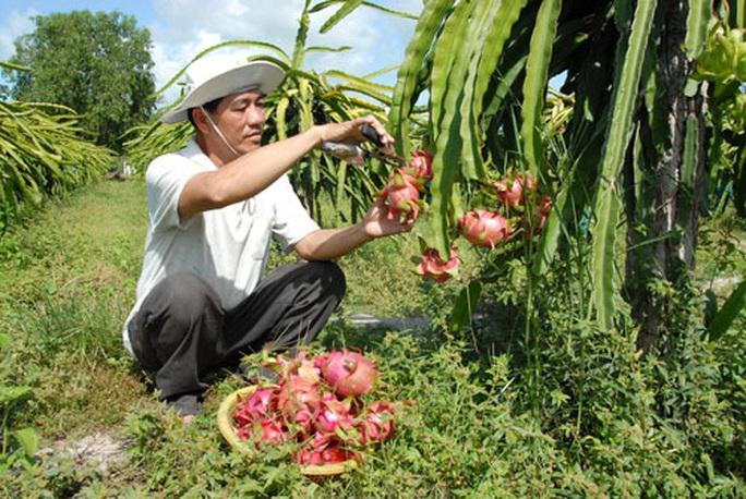 Nông sản khởi động lại thị trường Trung Quốc - Ảnh 1.