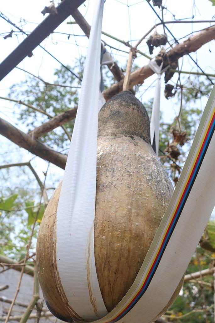 Lạ lùng những trái bầu siêu to, khổng lồ nặng từ 15-30 kg - Ảnh 4.