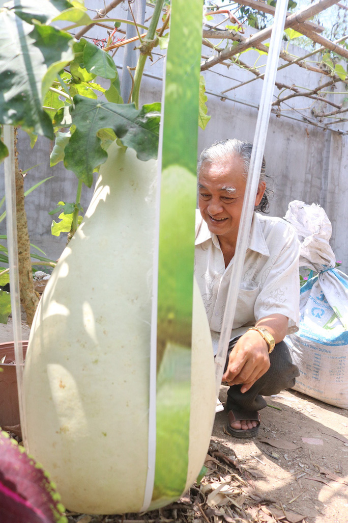 Lạ lùng những trái bầu siêu to, khổng lồ nặng từ 15-30 kg - Ảnh 6.