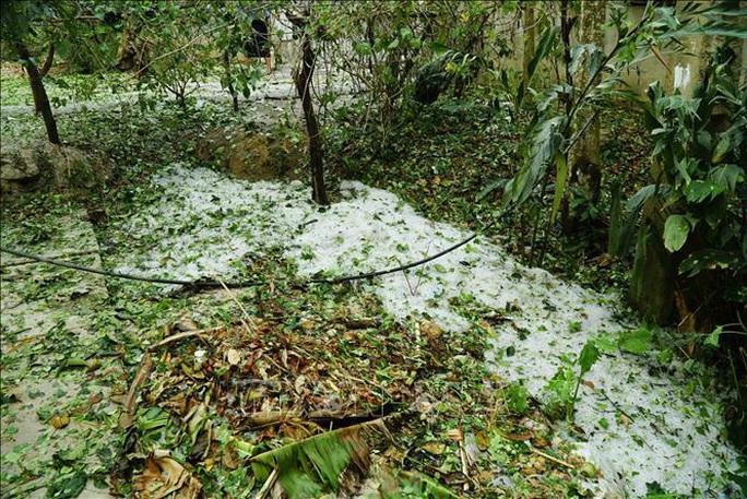 Mưa đá rơi trắng như tuyết tại Điện Biên - Ảnh 3.