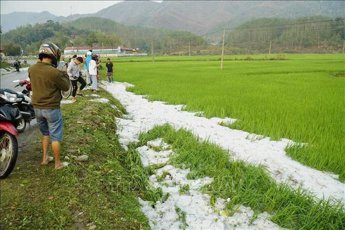 Mưa đá rơi trắng như tuyết tại Điện Biên - Ảnh 10.