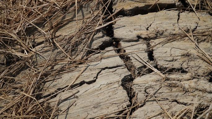 Nông dân miền Tây xếp hàng dài chờ nước ngọt trong cảnh hạn mặn - Ảnh 4.