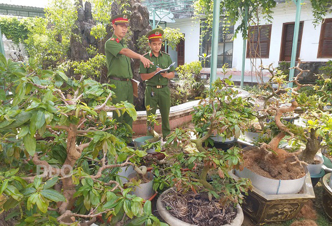 Trộm nhiều cây mai cảnh trị giá hơn nửa tỉ đồng rồi cắt phá thế để tránh bại lộ - Ảnh 1.