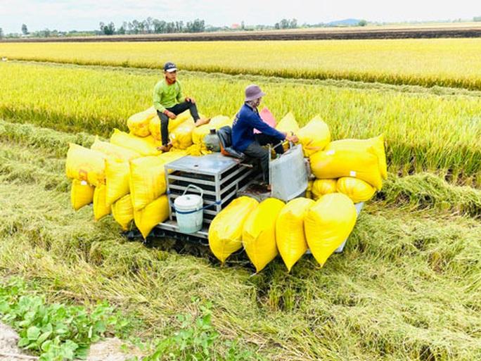 Xuất khẩu gạo: Những ngày hồi hộp... - Ảnh 1.