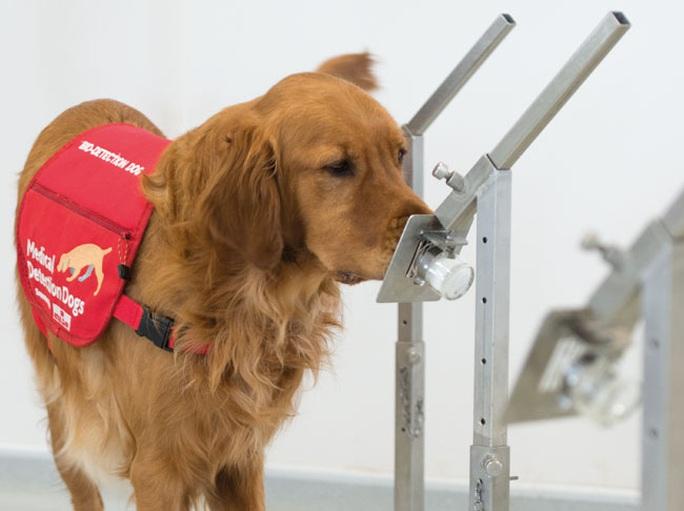 Mèo nhiễm virus SARS-CoV-2, chó được thử nghiệm để phát hiện người nhiễm bệnh - Ảnh 2.
