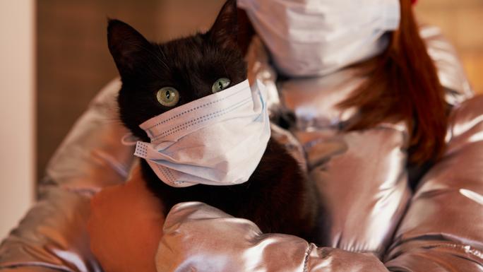 Mèo nhiễm virus SARS-CoV-2, chó được thử nghiệm để phát hiện người nhiễm bệnh - Ảnh 1.