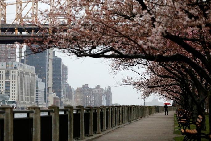 Nữ bác sĩ gốc Việt và tháng 3 bão táp ở New York - Ảnh 1.