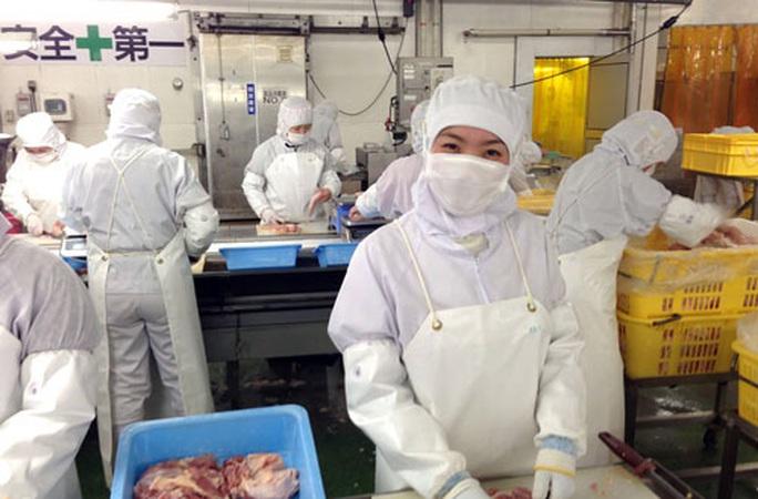 Hơn 560.000 lao động Việt Nam đang làm việc ở nước ngoài vẫn ổn định - Ảnh 1.