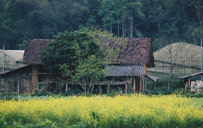 Du xuân Hà Giang, gieo mình giữa bạt ngàn hoa - Ảnh 15.