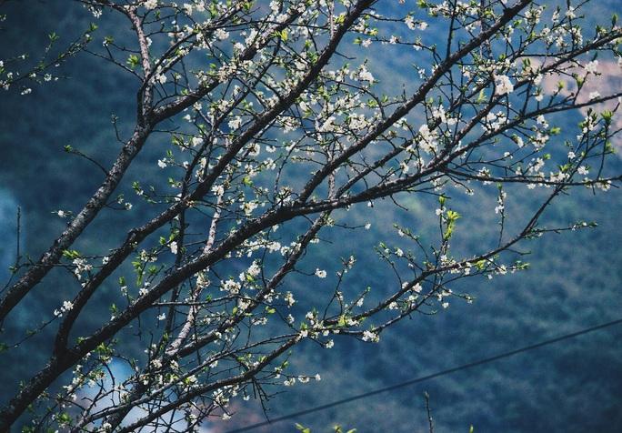 Du xuân Hà Giang, gieo mình giữa bạt ngàn hoa - Ảnh 3.