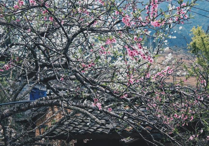 Du xuân Hà Giang, gieo mình giữa bạt ngàn hoa - Ảnh 12.