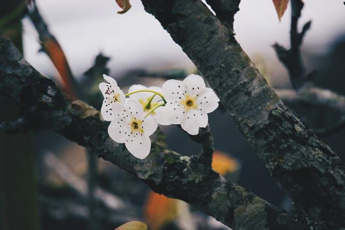 Du xuân Hà Giang, gieo mình giữa bạt ngàn hoa - Ảnh 13.