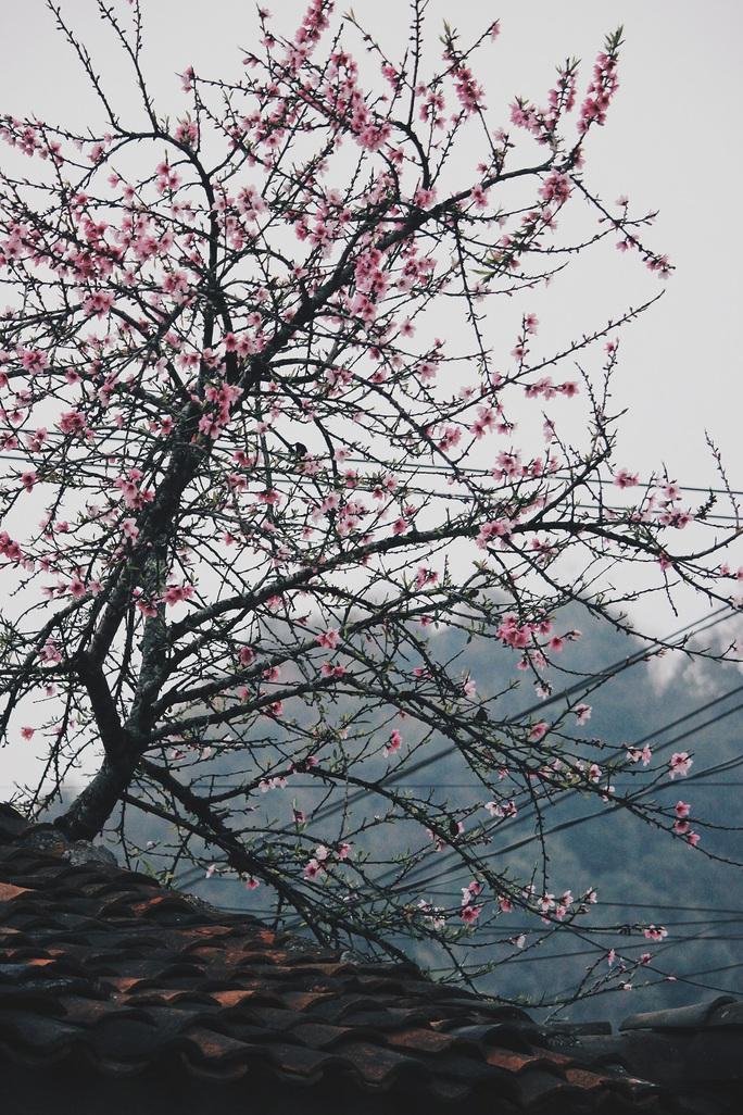 Du xuân Hà Giang, gieo mình giữa bạt ngàn hoa - Ảnh 7.