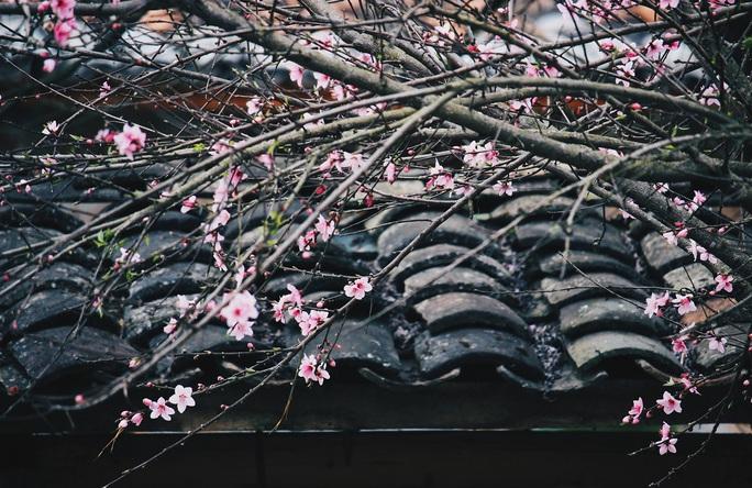 Du xuân Hà Giang, gieo mình giữa bạt ngàn hoa - Ảnh 10.