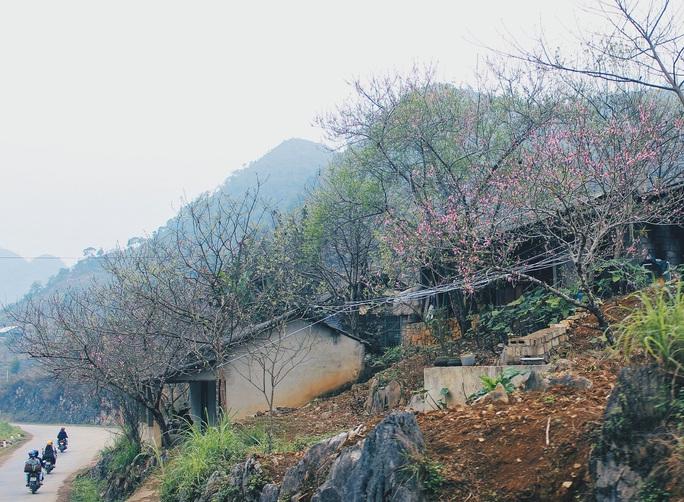 Du xuân Hà Giang, gieo mình giữa bạt ngàn hoa - Ảnh 4.