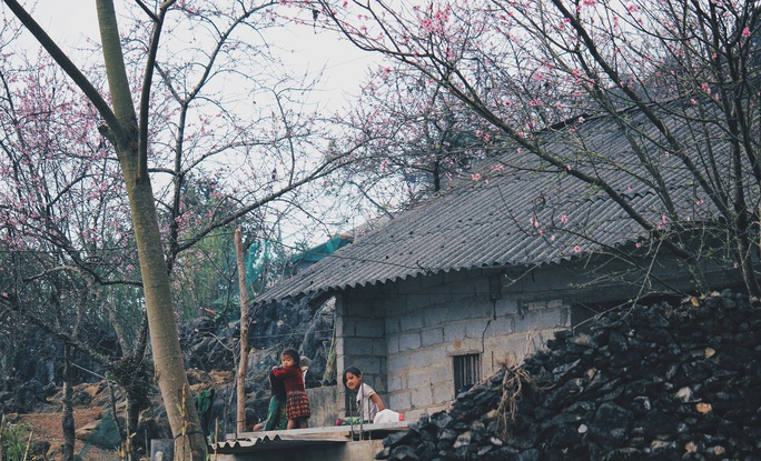 Du xuân Hà Giang, gieo mình giữa bạt ngàn hoa - Ảnh 8.