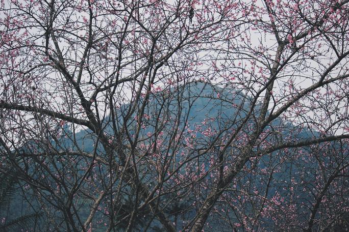Du xuân Hà Giang, gieo mình giữa bạt ngàn hoa - Ảnh 2.