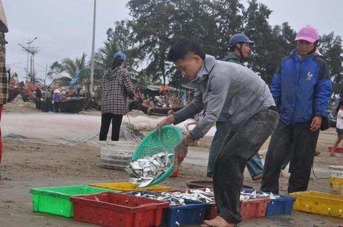 Nhiều người dậy thật sớm rủ nhau ra biển bắt hàng tấn cá trích - Ảnh 5.
