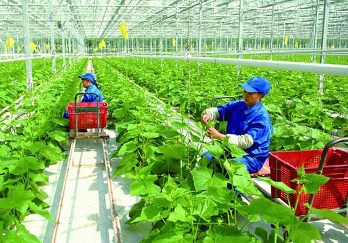 Những chính sách lao động nông nghiệp của Đài Loan cần lưu ý - Ảnh 1.