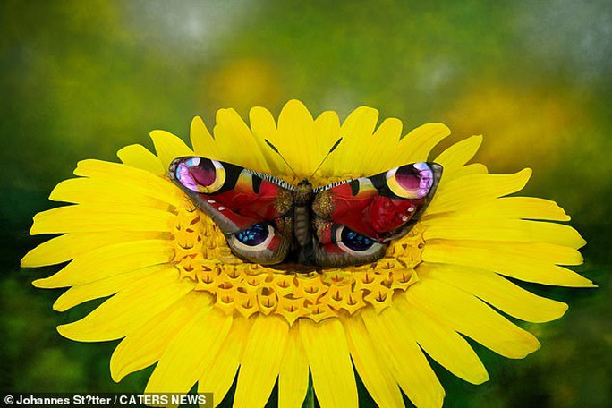 Biến người mẫu khỏa thân thành... bươm bướm - Ảnh 1.