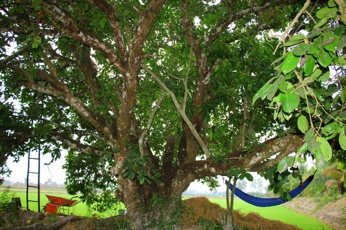 Về miền Tây thưởng thức trái rừng màu tím có vị ngọt xen lẫn chua, chát - Ảnh 11.