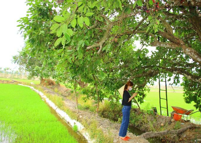 Về miền Tây thưởng thức trái rừng màu tím có vị ngọt xen lẫn chua, chát - Ảnh 1.
