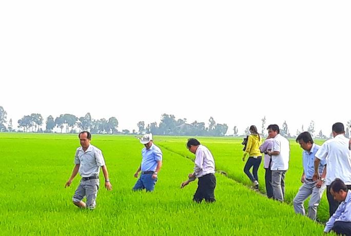 Bộ Công Thương hoả tốc xin ý kiến về an ninh lương thực quốc gia đối với gạo nếp - Ảnh 1.