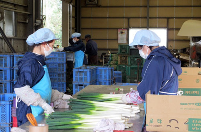 Nhật Bản bảo vệ quyền lợi lao động người nước ngoài trong dịch Covid-19 - Ảnh 1.