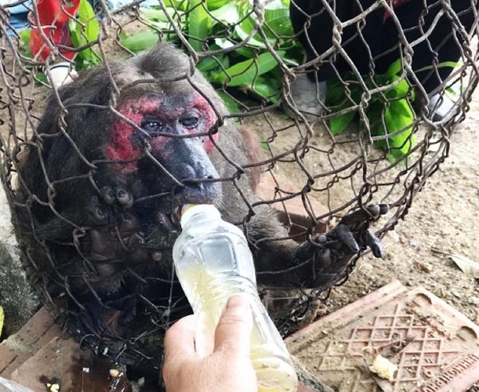 Khỉ mặt đỏ chết sau khi bàn giao công viên động vật hoang dã của FLC - Ảnh 1.