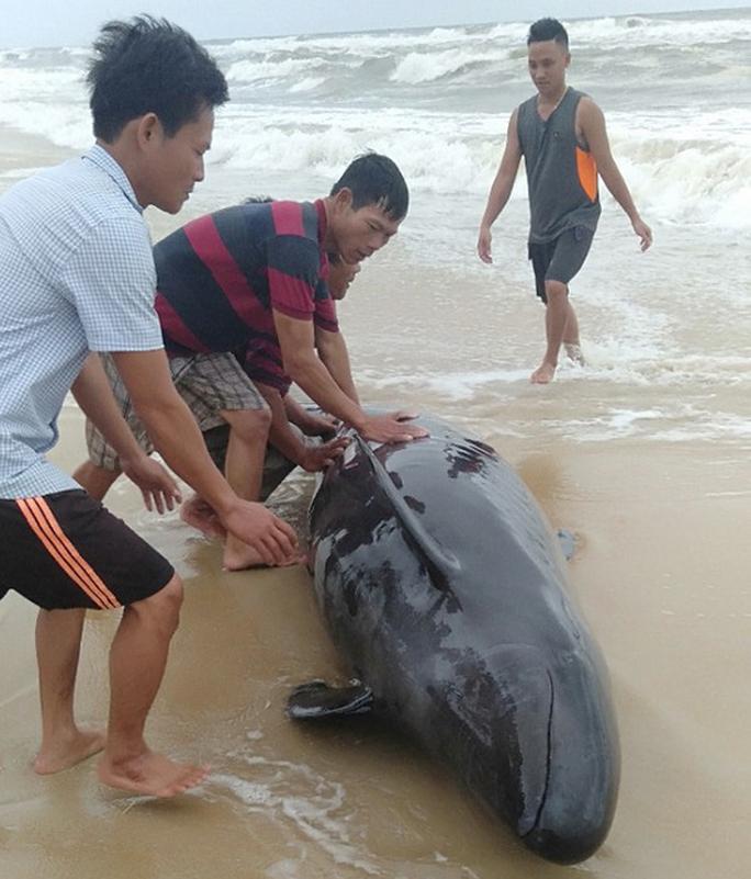 Người dân đạp sóng cứu cá voi mắc cạn ở bờ biển - Ảnh 1.