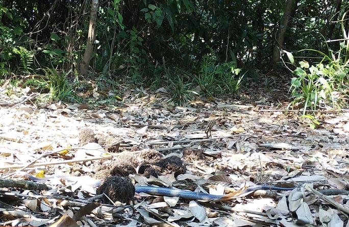 Phát hiện loài rắn hổ mang Trung Quốc nguy cấp, quý hiếm - Ảnh 1.
