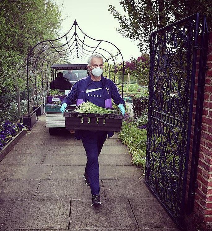 Thú vị hình ảnh người vận chuyển Mourinho giữa vườn rau - Ảnh 1.
