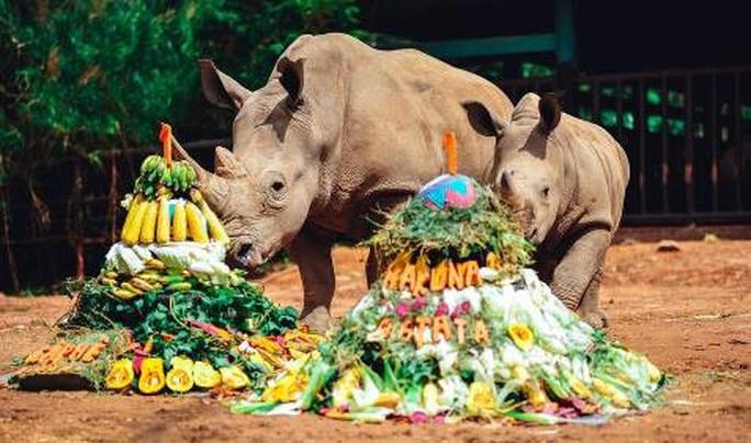 Vinpearl Safari đón tê giác thứ 3 chào đời - Ảnh 4.