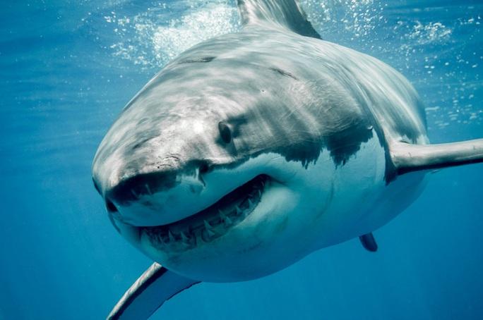 Chưa kịp lên thuyền, người đàn ông bị cá mập cắn chết - Ảnh 1.