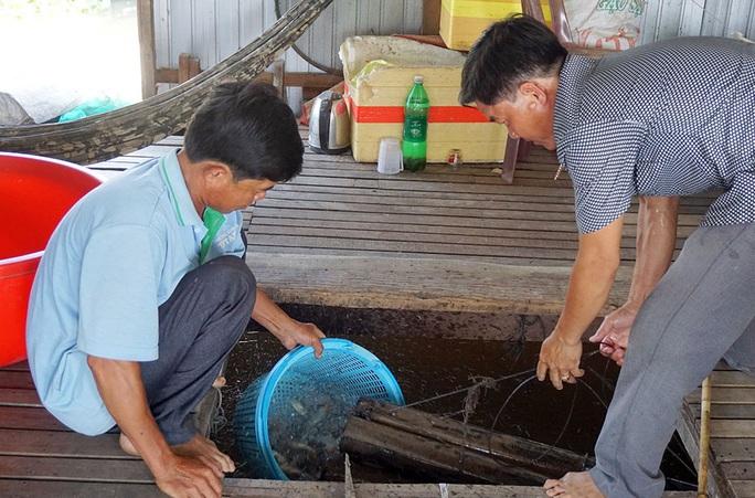 Chuyện con cá kêu éc éc ở Phú Tân - An Giang - Ảnh 2.