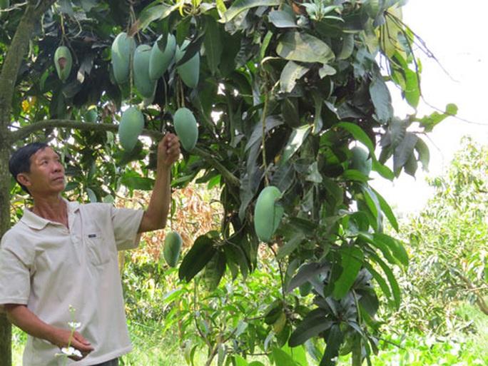 Phập phù cây ăn trái ngoại - Ảnh 1.