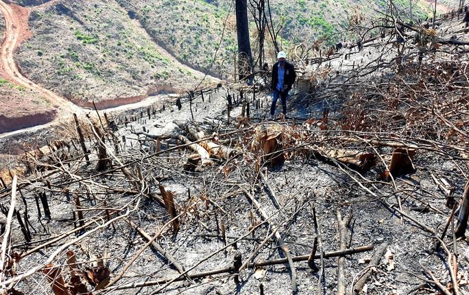 Chủ tịch Quảng Nam yêu cầu khởi tố, điều tra vụ cháy 32 ha rừng - Ảnh 1.