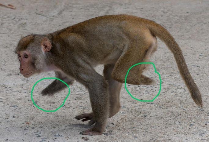 Đà Nẵng: Truy tìm đối tượng dùng ná cao su tấn công đàn khỉ tại khuôn viên chùa - Ảnh 3.