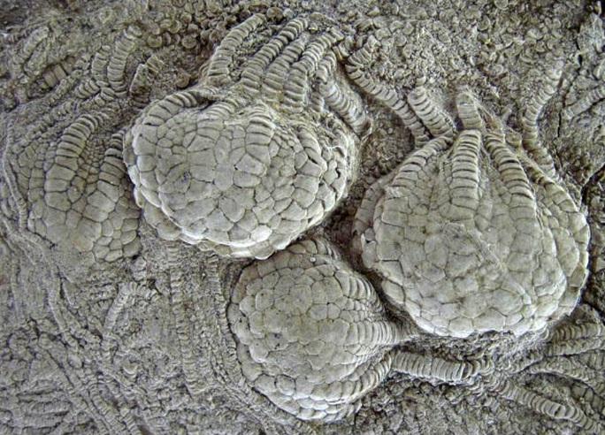 Sinh vật 80 triệu tuổi như ngoài hành tinh hiện diện khắp trái đất - Ảnh 1.