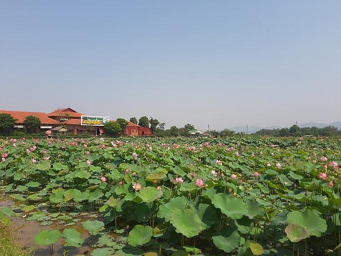 CLIP: Hàng ngàn người về làng Sen dịp kỉ niệm 130 năm ngày sinh Bác Hồ - Ảnh 3.