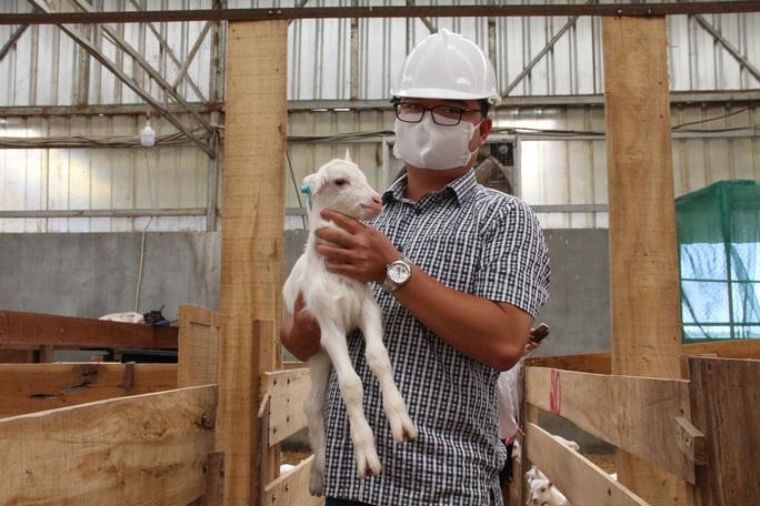 Ngắm đàn dê trắng tuyệt đẹp, lớn nhất Việt Nam - Ảnh 6.