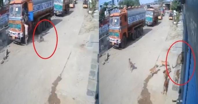 Video: Báo vồ hụt người, bị đàn chó dồn tới đường cùng - Ảnh 1.