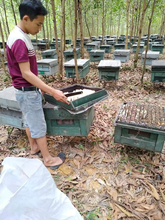Ong nuôi hàng trăm tổ chết bất thường, nghi bị đầu độc - Ảnh 1.